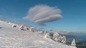 Sunny Snow Covered Mountain Top för flyg- flygparad snöig vintergrönt träd Forest Shot Flyg- sikt av träd som gjuter skuggor stock video
