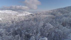 Sunny Snow Covered Mountain Top för flyg- flygparad snöig vintergrönt träd Forest Shot Flyg- sikt av träd som gjuter skuggor lager videofilmer