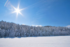 Sunny snow Landscape Royalty Free Stock Photo