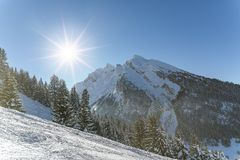 Sunny snowy fir tree in the mountain. Sunny snowy fir tree on slope ski in french alps stock image