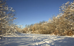 Sunny snowy winter Royalty Free Stock Photos