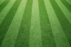 Sunny socccer or rugby grass field background Royalty Free Stock Images