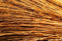 Sunny sorghum texture. Photograph of dried sorghum. Sunny texture Stock Photo