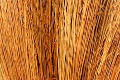 Sunny sorghum texture. Photograph of dried sorghum. Sunny texture Royalty Free Stock Photos