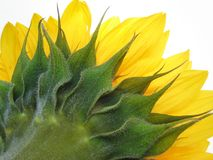 Sunny spikes Royalty Free Stock Photography