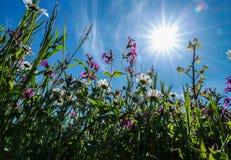 Sunny Spring Royalty Free Stock Photos