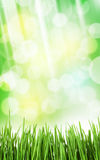 Sunny spring background with grass and bokeh Royalty Free Stock Photos