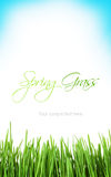 Sunny spring background with grass and sky Stock Images