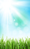 Sunny spring background with grass and sky Stock Image
