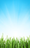 Sunny spring background with grass and sky Stock Photography