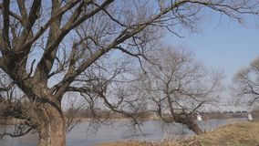 Windy river trees stock video footage