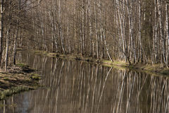 Sunny spring day on a small waterway. In spring the trees are reflected in silty water royalty free stock photos