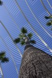 Palm tree to the sky between the buildings of the city of arts and sciences royalty free stock images