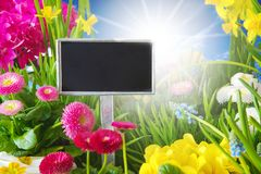Sunny Spring Flower Meadow, Copys Space. Sign With Copy Space For Advertisement. Sunny Spring Flower Meadow With Daisy, Narcissus, Primrose And Hyacinth Stock Photography