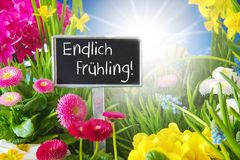 Sunny Spring Flower Meadow, Endlich Fruehling Means Hello Spring Stock Image