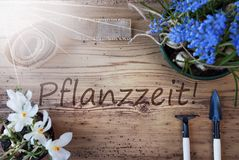 Sunny Spring Flowers, Pflanzzeit Means Planting Season. German Text Pflanzzeit Means Planting Season. Sunny Spring Flowers Like Grape Hyacinth And Crocus Stock Photography