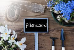 Sunny Spring Flowers, Sign, Pflanzzeit Means Planting Season. Sign With German Text Pflanzzeit Means Planting Season. Sunny Spring Flowers Like Grape Hyacinth Stock Images