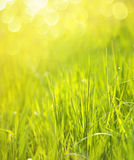 Sunny spring green grass background Stock Photo