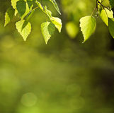 Sunny spring green leaves background Stock Images