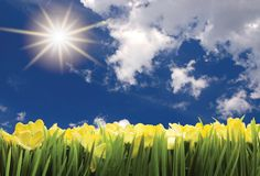 Sunny spring landscape. With lawn and flowers Stock Photography
