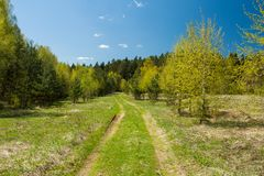 Sunny Spring Landscape With Road-Weg aan Forest On Blue Sky Royalty-vrije Stock Afbeeldingen