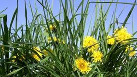 Sunny Spring Lawn lager videofilmer