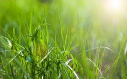 Sunny spring light green grass Royalty Free Stock Photos