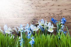 Sunny Spring Meadow With Crocus And Gras, Copy Space Stock Photo