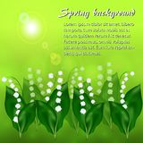 Sunny spring background with lily-of-the-valley flowers. Sunny spring meadow with flowers of lily of the valley Stock Photo