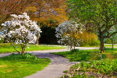 Sunny spring morning in the botanical garden Royalty Free Stock Photos