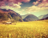 Sunny spring morning in the Caucasus mountain Royalty Free Stock Photography