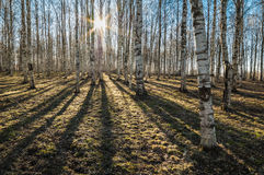 Sunny spring morning in forest Stock Image