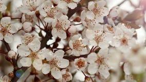 Sunny Spring Morning i Plum Garden arkivfilmer