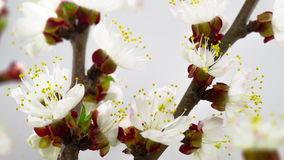 Sunny Spring Morning in Peach Garden stock video footage
