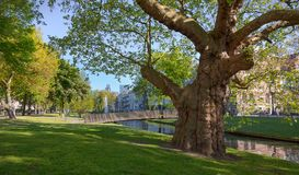 Sunny spring morning view of the Westersingel, Rotterdam stock photography