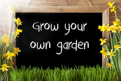 Sunny Spring Narcissus, Chalkboard, Grow Your Own Garden Stock Image