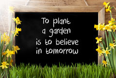 Sunny Spring Narcissus, Chalkboard, Quote Plant Garden Believe In Tomorrow