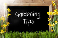 Sunny Spring Narcissus, Chalkboard, Text Gardening Tips Stock Photos