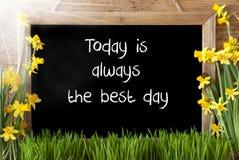 Sunny Spring Narcissus, Tafel, Zitat ist heute der beste Tag stockfoto