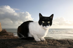 Sunny stray cat, Cadiz Stock Images