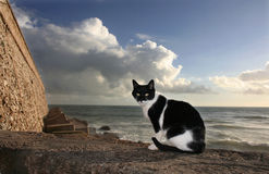 Sunny stray cat, Cadiz Royalty Free Stock Image