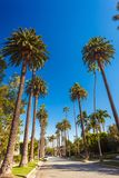Sunny street of Beverly hills with palms royalty free stock photography