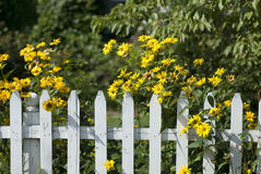 Sunny Suburban Scene. White Picket Fence with yellow daisies on a summer day Royalty Free Stock Photos