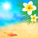 Sunny summer beach with shell and flowers Royalty Free Stock Photography