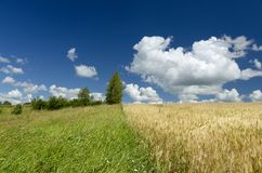Edge of golden wheat field and green meadow stock image