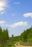 Sunny summer day. A dirt road on a sunny summer day Royalty Free Stock Images