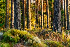 Sunny Summer Day in het Bos - Vegetatie en Flora van Hout stock fotografie