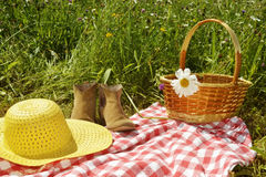 Sunny summer day on the meadow Royalty Free Stock Photos