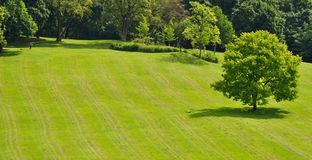 A sunny summer day in the park. Meditation exercise, lost bicycle and lonesome tree on freshly mowed lawn royalty free stock image