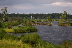 Sunny summer day in  swamp lake Royalty Free Stock Photography